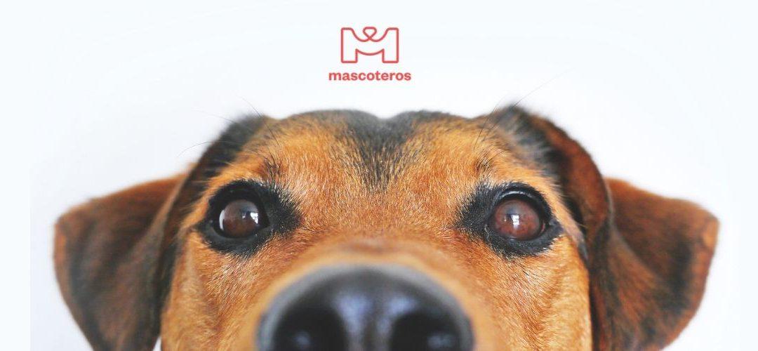 Mascoteros: Primer Marketplace español del sector mascota
